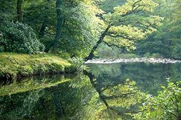 The river Dart - green trees over the riverbank